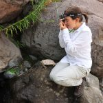 Las desconocidas plantas descubiertas en la RN Río de los Cipreses